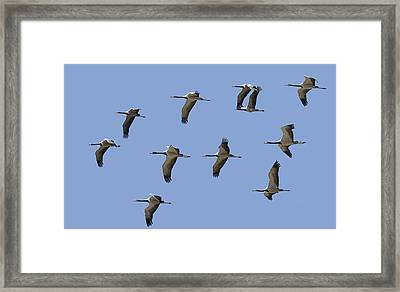 Photos A Indexer Framed Print by Gerard Lacz