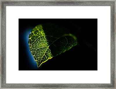 Photosynthesis Neighborhoods Framed Print by Brian Xavier