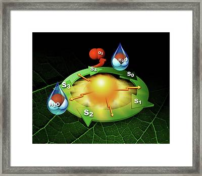 Photosynthesis Photosystem II Framed Print by Slac National Accelerator Laboratory, Lbl