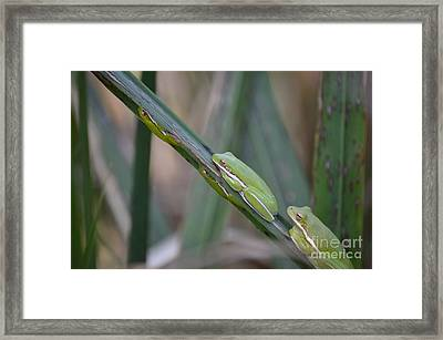 Phyllis Have You Seen The Kids Framed Print by Kathy Gibbons