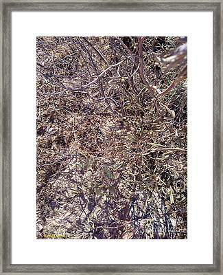 Framed Print featuring the photograph Phylum by Ramona Matei