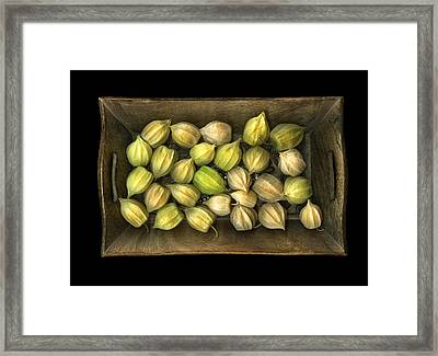 Physalis Peruviana Framed Print by Christian Slanec
