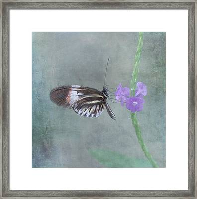 Piano Key Butterfly Framed Print by Kim Hojnacki