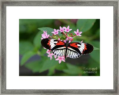 Piano Key Butterfly On Pink Penta Framed Print