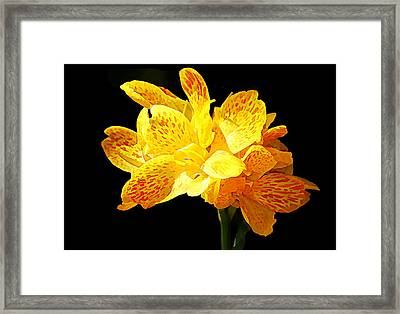 Picasso Flower Framed Print by Jean Connor