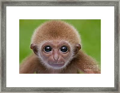 Pick A Card Any Card Framed Print by Ashley Vincent