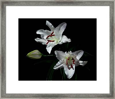Framed Print featuring the photograph Pick-a-lily by Paul Indigo