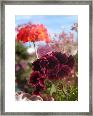 Framed Print featuring the photograph Pick Me by Lew Davis