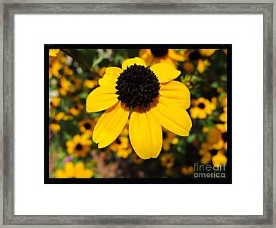 My Darling Sunshine Framed Print by Kimberlee Baxter