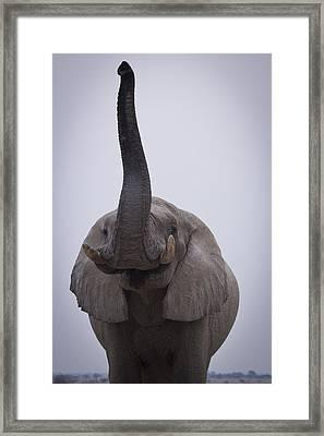 Pick Me Pick Meee Framed Print by Alison Buttigieg