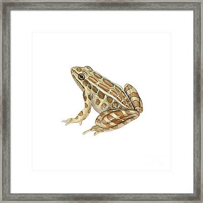 Pickerel Frog Framed Print by Carlyn Iverson