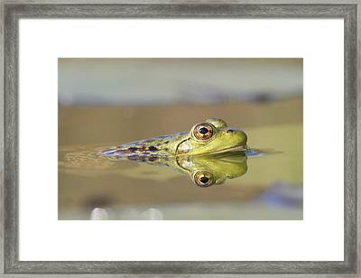 Pickerel Frog Nova Scotia Canada Framed Print by Scott Leslie