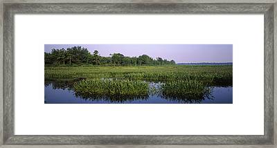 Pickerelweed In A Lake, Long Pond Framed Print by Panoramic Images