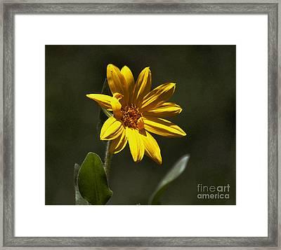 Pickin' Wildflowers  Framed Print by Juls Adams