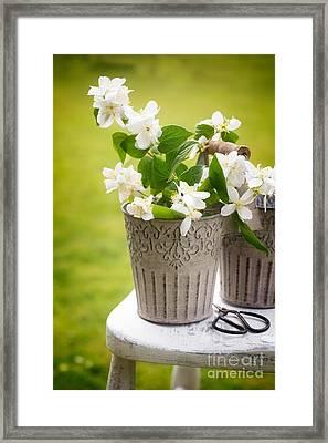 Picking Blossom Framed Print