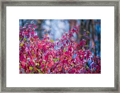 Picturesque Autumn - Featured 3 Framed Print by Alexander Senin