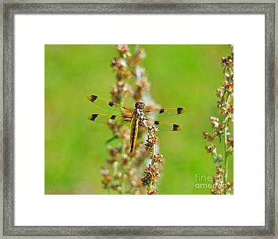 Picturesque Painted Framed Print by Al Powell Photography USA