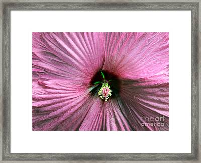 Pie Plate Hibiscus Framed Print by Nina Silver