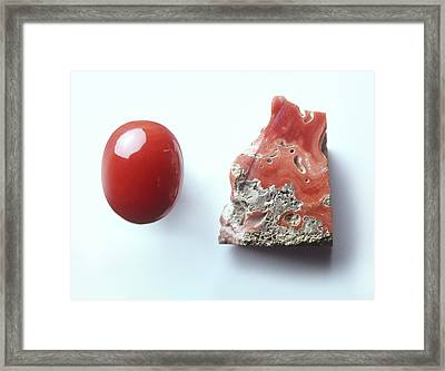 Piece Of Red Coral And Red Coral Cabochon Framed Print by Dorling Kindersley/uig