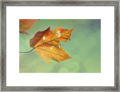 Pieces Of Me Framed Print by Amy Tyler