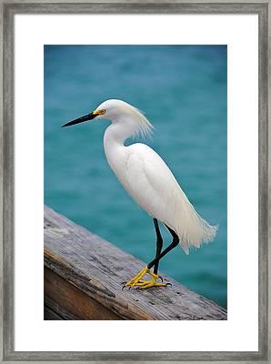 Pier Bird Framed Print