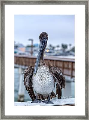 Pier Pelican Framed Print by Edward Fielding