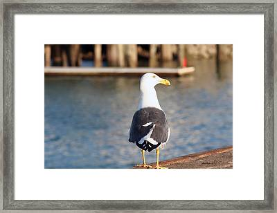 Framed Print featuring the photograph Pier Watch by Dick Botkin