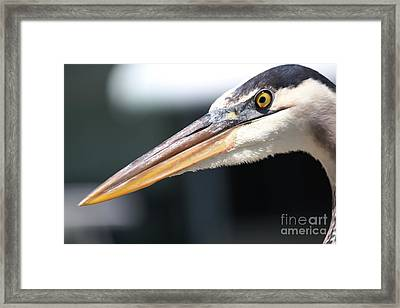 Piercing Look Framed Print by Theresa Willingham