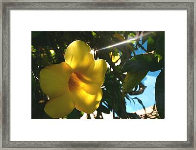 Piercing Through Framed Print by Frederico Borges