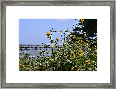 Piering Through Framed Print by Leticia Latocki