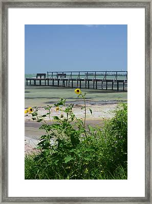 Piering Through Ll Framed Print by Leticia Latocki