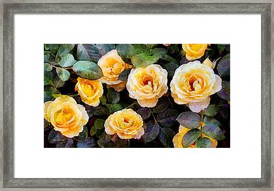 Pierre's Peach Roses Framed Print