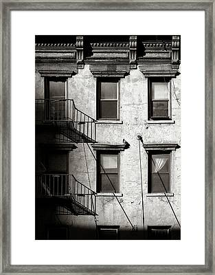 Pigeon Framed Print by Dave Bowman