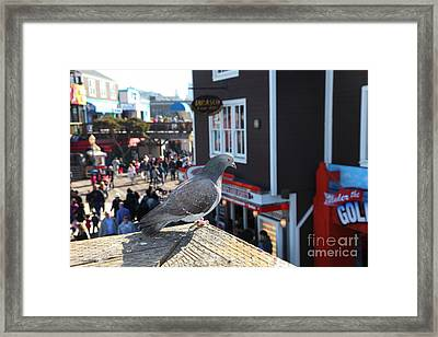 Pigeon Enjoying Pier 39 In San Francisco California 5d26131 Framed Print by Wingsdomain Art and Photography