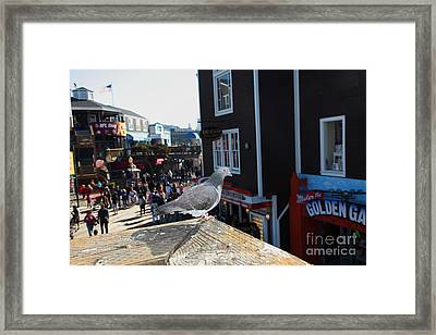 Pigeon Enjoying Pier 39 In San Francisco California 5d26132 Framed Print by Wingsdomain Art and Photography