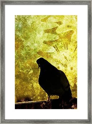 Pigeon In Close-up  Framed Print by Tommytechno Sweden