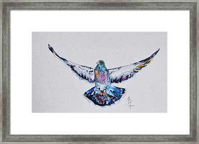 Pigeon In Flight Framed Print by Beverley Harper Tinsley
