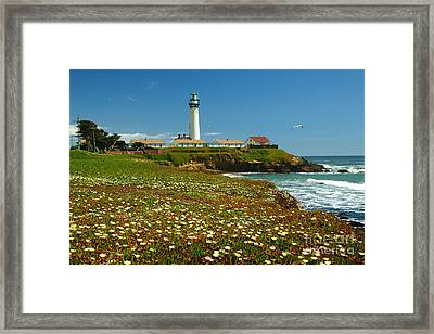 Pigeon Lighthouse Framed Print