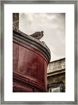 Pigeon Framed Print by Margie Hurwich