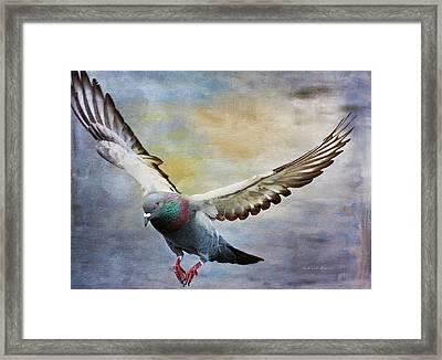 Pigeon On Wing Framed Print by Deborah Benoit