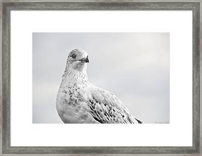 Pigeon Pride II Framed Print