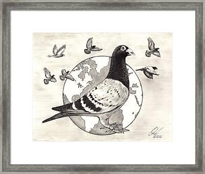 Pigeon Race Framed Print