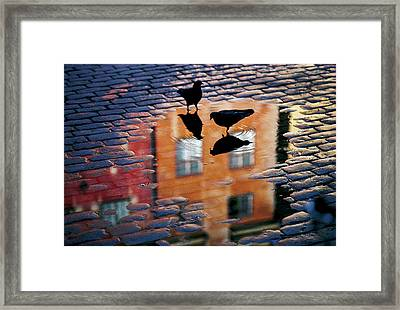 Pigeons Framed Print