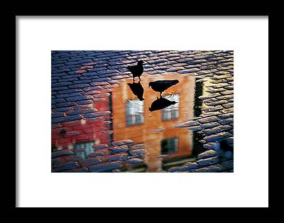 Puddle Framed Prints