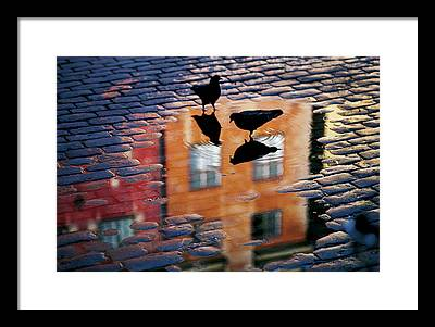 Pigeon Photographs Framed Prints