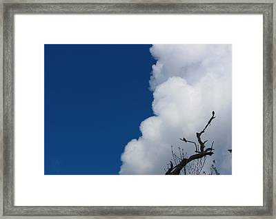 Pigeons Follow Clouds Framed Print by Kym Backland