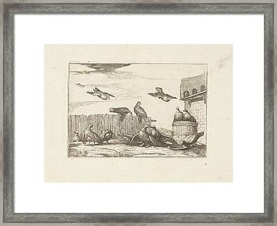 Pigeons, Francis Barlow, Pieter Schenk Framed Print