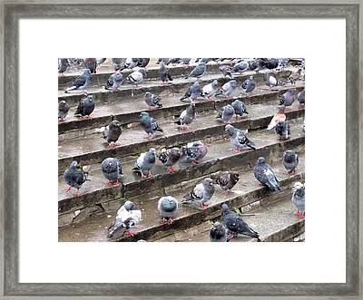 Pigeons Framed Print by Michael Fitzpatrick