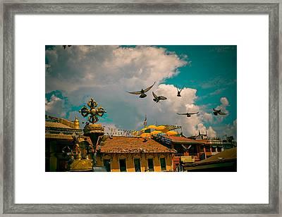 Pigeons Near Monastery In Boudnath Kathmandu Framed Print by Raimond Klavins