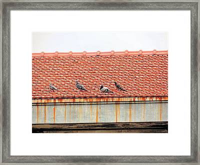 Pigeons On Roof Framed Print by Aaron Martens
